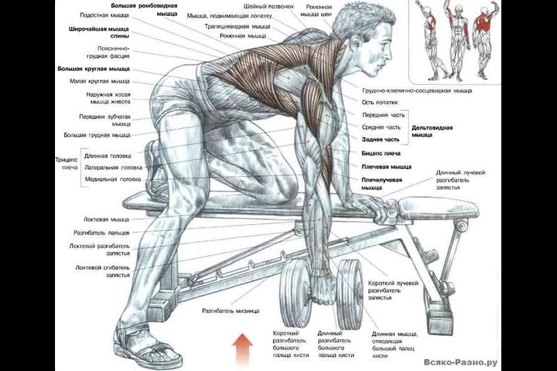 Упражнения для верха спины