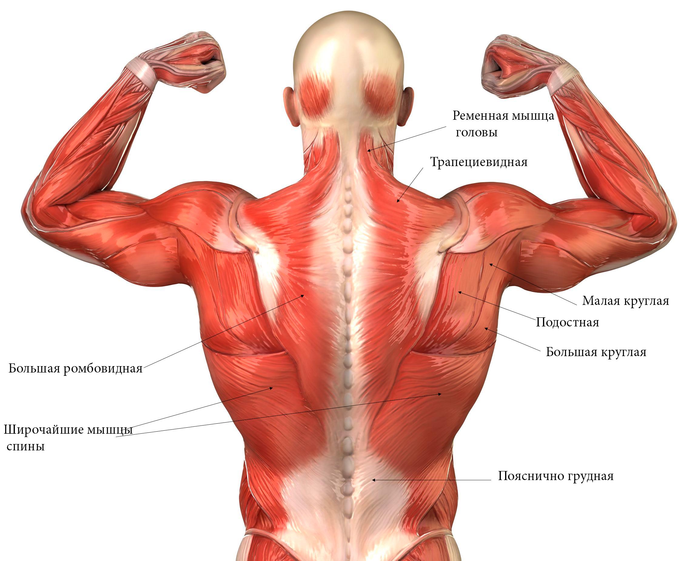 тренировка мышц предплечья схема